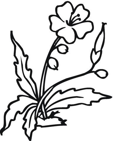 385x480 Blooming Hibiscus Flower Coloring Page Free Printable Coloring Pages