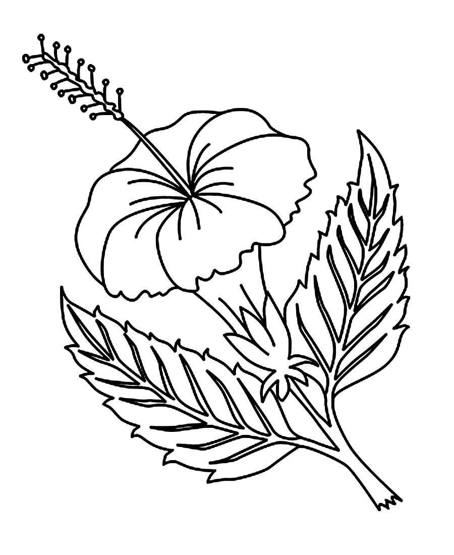 Hibiscus flower drawing step by step at getdrawings free for 900x1100 printable hibiscus flower coloring pages hawaiian flower coloring izmirmasajfo Image collections