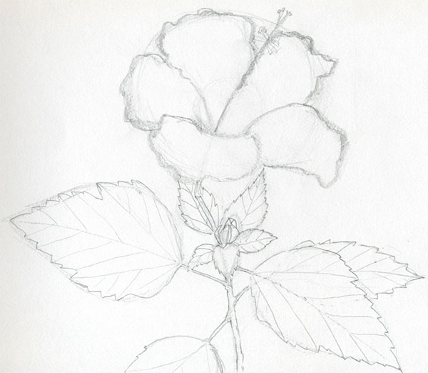 600x522 Drawing Flower For Kids Beginners Step By Step With Photos