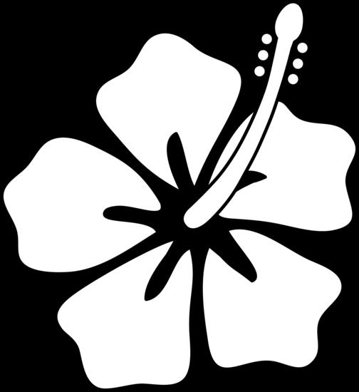 504x550 Drawn Hibiscus Hawaiian Flower
