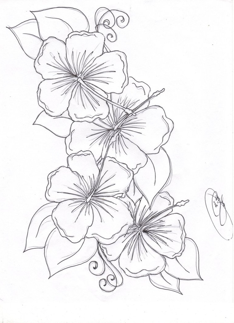 Hibiscus flower pencil drawing at getdrawings free for 762x1049 hibiscus flowers sketching images hibiscus flower pencil drawing izmirmasajfo