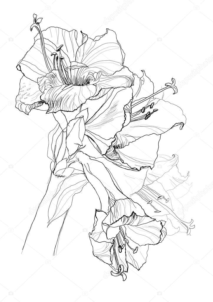 723x1023 Hibiscus Flower Stock Vector Vergasova