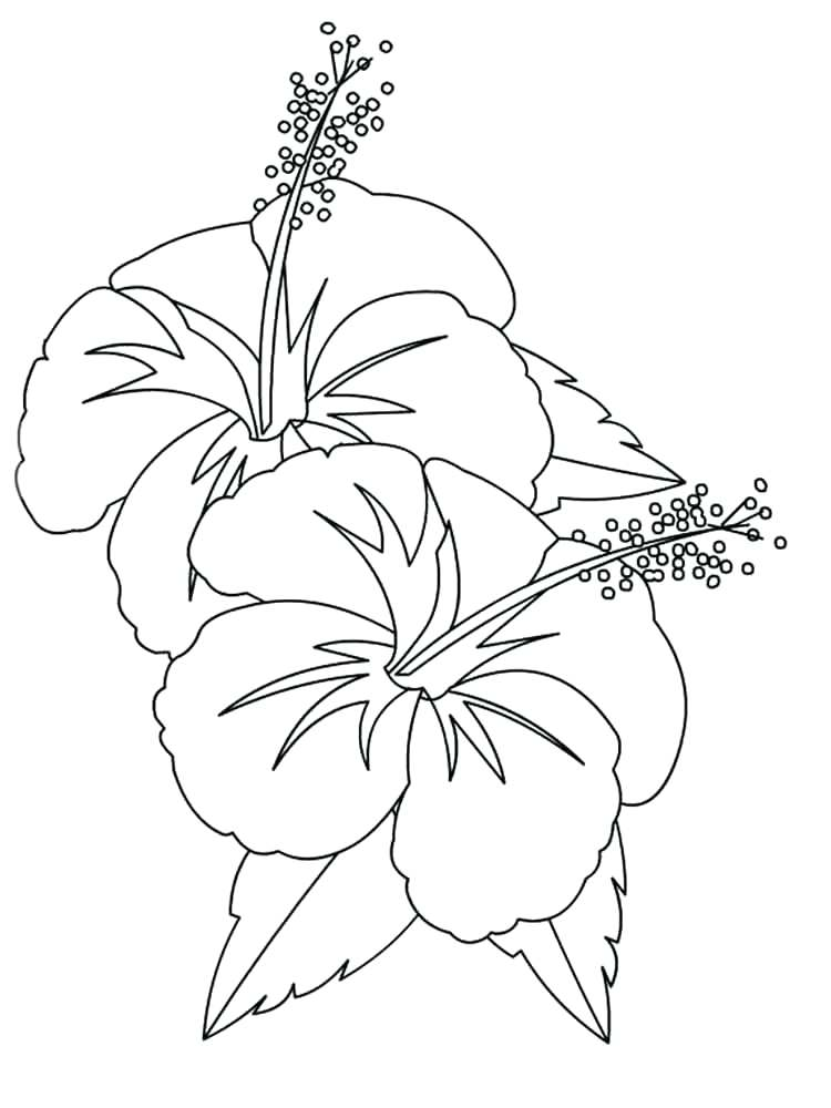 750x1000 Ideal Hibiscus Coloring Page Image Pencil And In Color Pages
