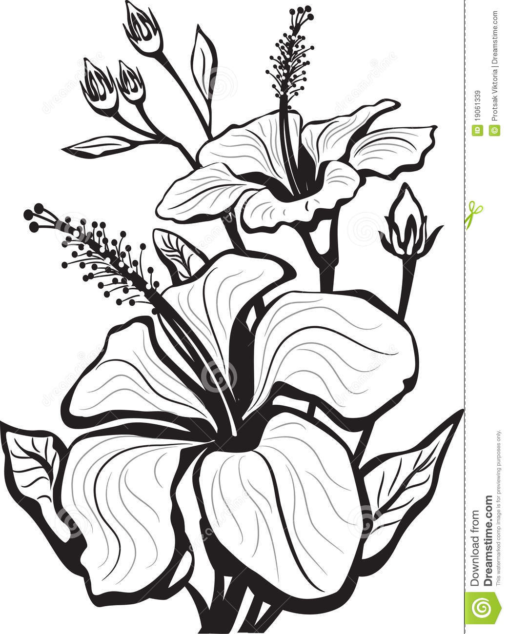 1041x1300 Sketch Of Hibiscus Flowers How To Draw And Sketch Hibiscus Flower