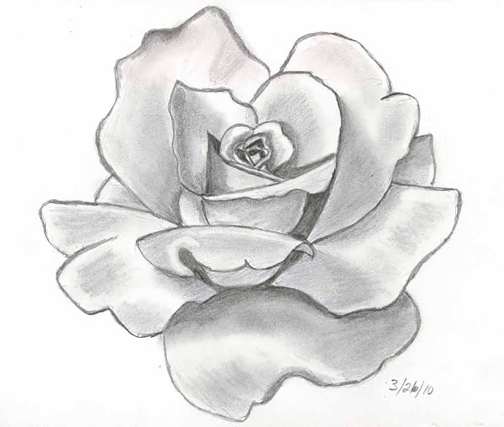 1024x869 Tag Hibiscus Flower Pencil Drawing