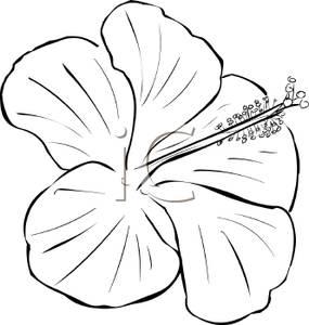 285x300 White Clipart Hibiscus Flower