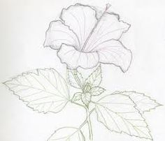 236x202 Draw Flowers Drawing, Hibiscus Flower By Jgarvey