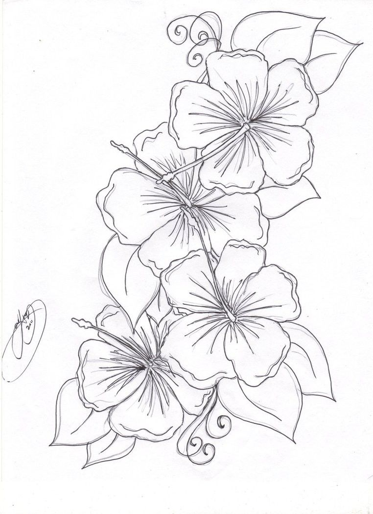 762x1049 Beautiful Flower Coloring Pages Free Hibiscus Flower Coloring