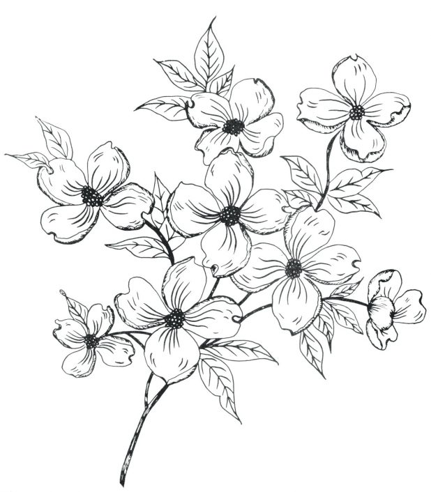 618x706 Easy Flower Drawing Outline Images Simple Rose Vine Drawings How