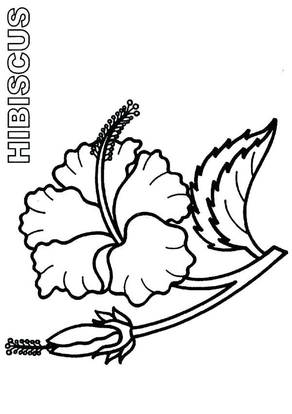 600x849 Hibiscus Flower Coloring Pages Bloom And Burgeon Hibiscus Flower