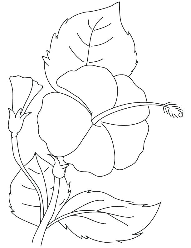 612x792 Hibiscus Flower Coloring Pages Hibiscus Brilliant Coloring Page