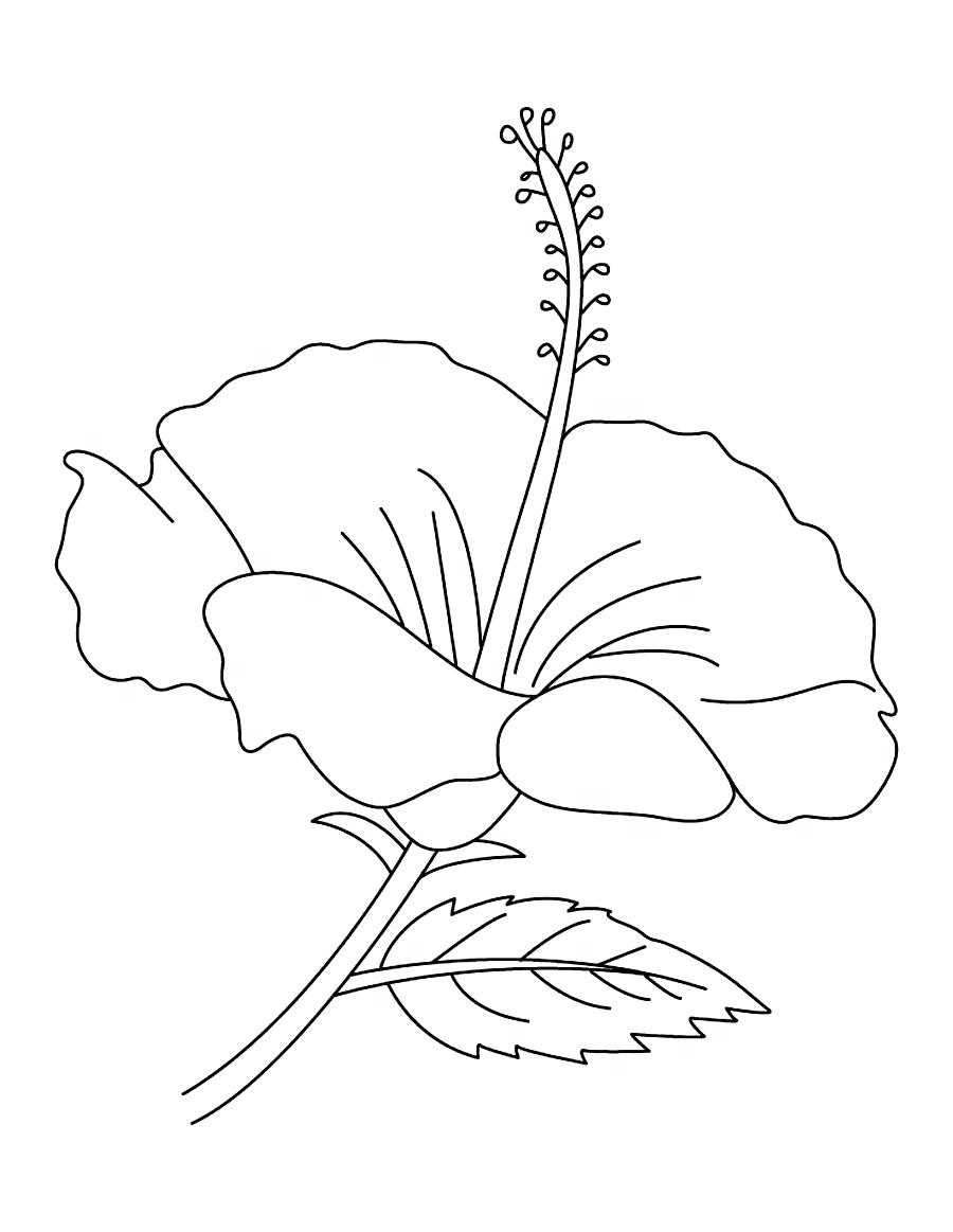 900x1163 Hibiscus Flower Coloring Pages To Print 91 Extraordinary Outline