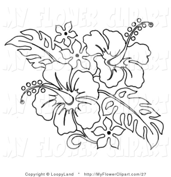 600x620 Hibiscus Coloring Pages Cliprt Coloring Page