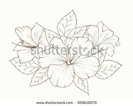 450x358 Drawn Lily Hibiscus Flower