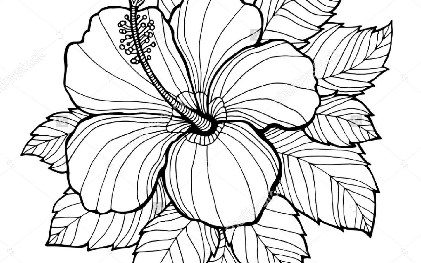 Hibiscus line drawing at getdrawings free for personal use 1440x900 hibiscus flower coloring pages download and printout page for kids izmirmasajfo