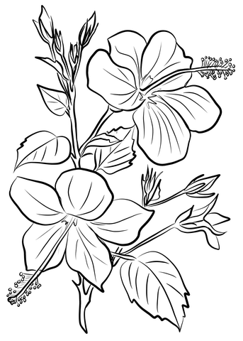 343x480 Hibiscus Coloring Page Free Printable Coloring Pages