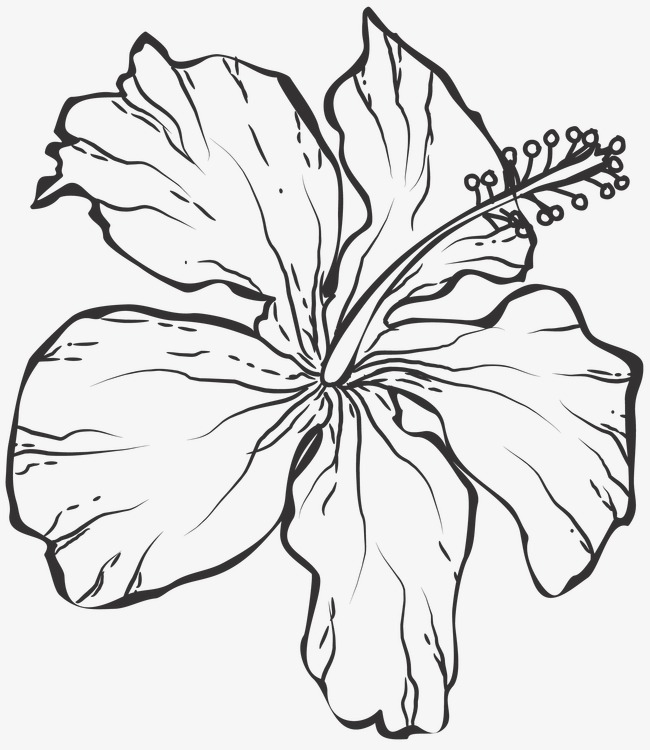 650x750 Line Drawing Flowers, Plant, Line Drawing Graphics, Flowers Png