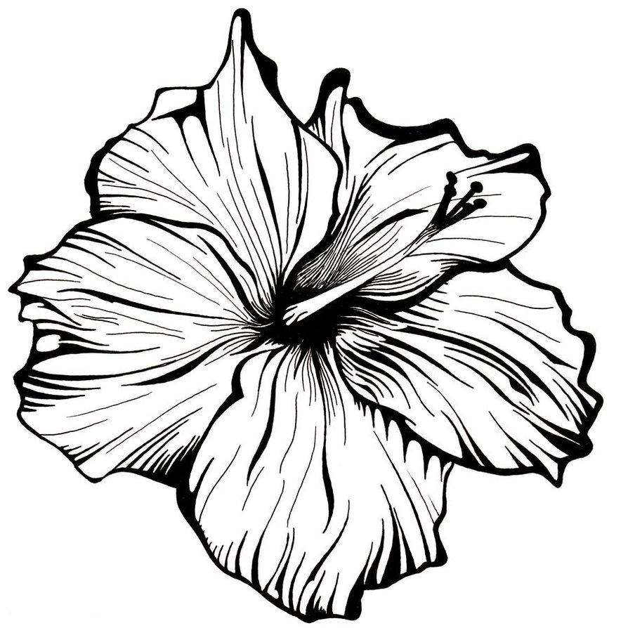 Hawaiian Flower Line Drawing Flowers Healthy