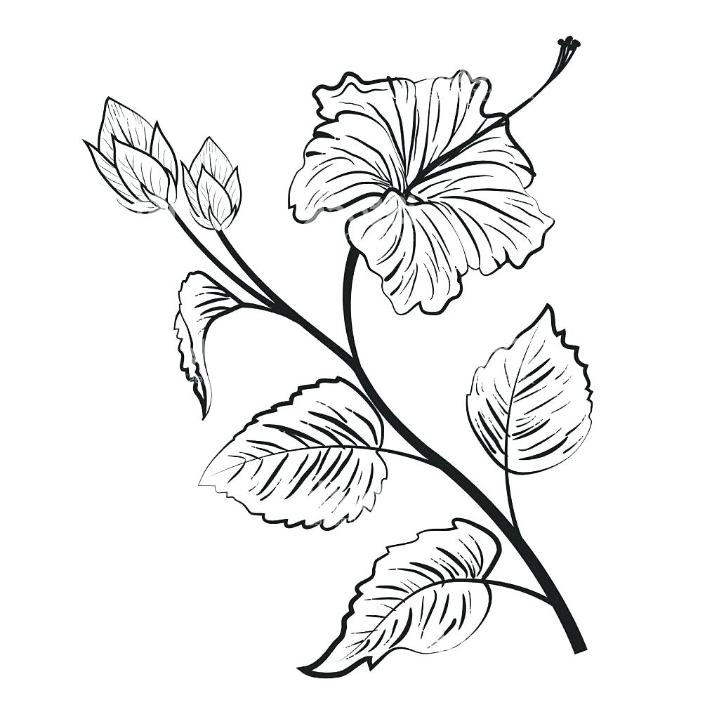 1024x1024 Coloring Hibiscus Coloring Pages