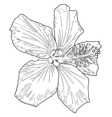 380x400 Hibiscus Flower Drawing