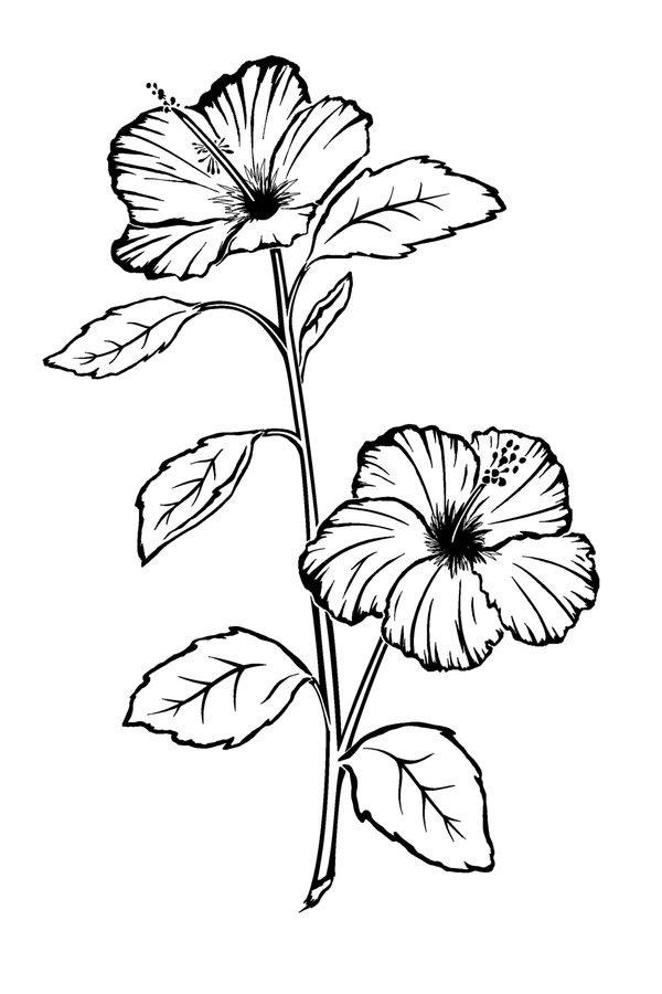600x900 Drawn Hibiscus Long Flower