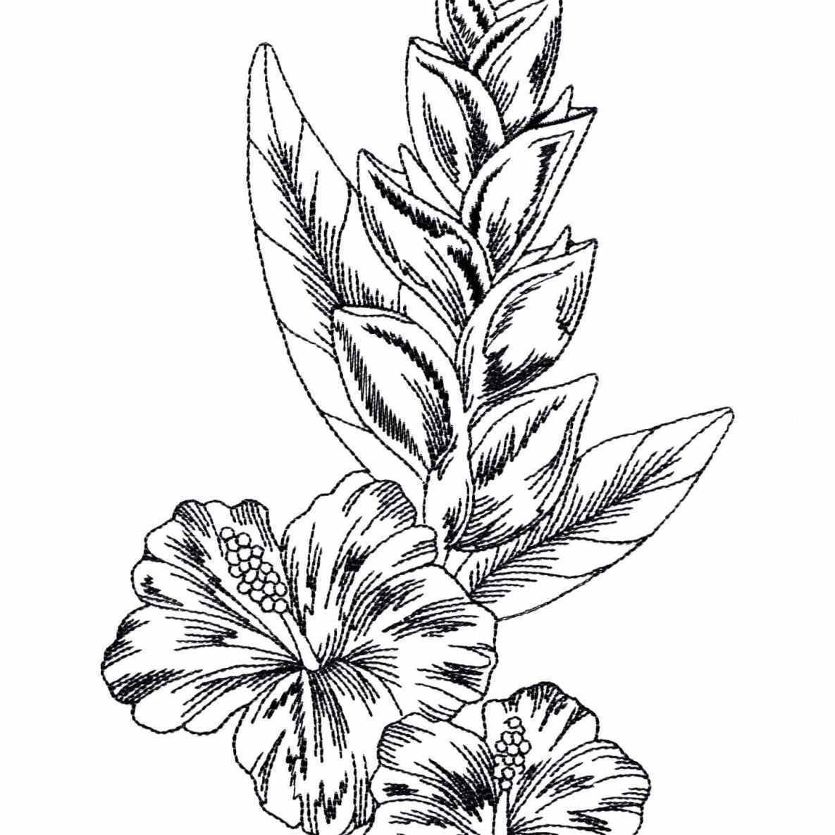 1185x1185 Flower Pencil And In Color Drawn Rainforest Flowers Drawing