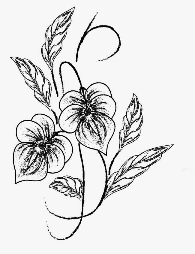 650x846 Flower Sketch, Black, Pencil Drawing, Plant Png Image For Free