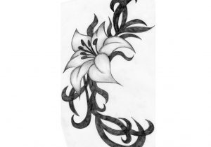 300x210 Flowers Pencil Sketch How To Draw And Sketch Hibiscus Flower Using