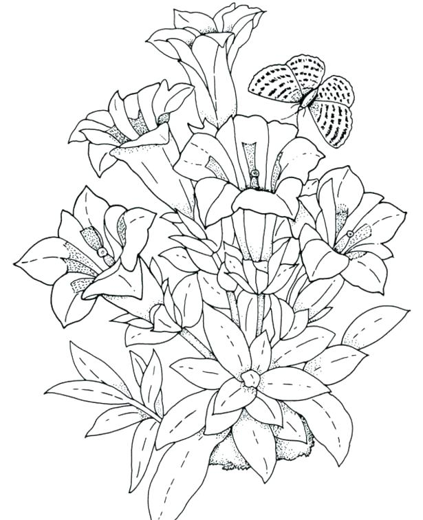 615x756 Ideal Hibiscus Coloring Page Image