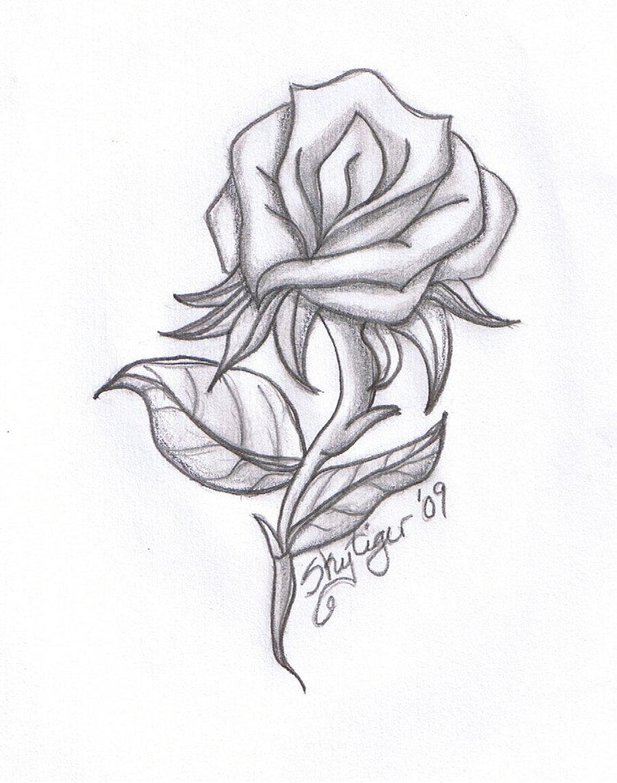 900x1142 Pencil Drawing Flowers Pics
