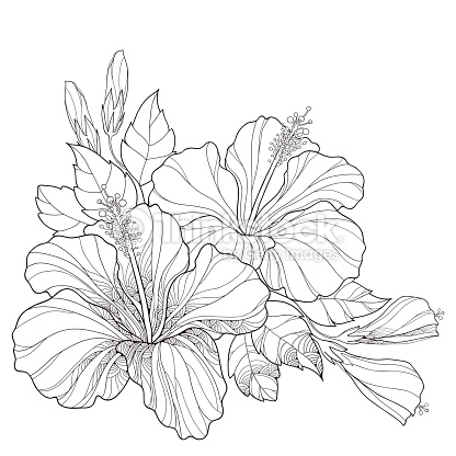 416x416 Drawn Bouquet Hibiscus