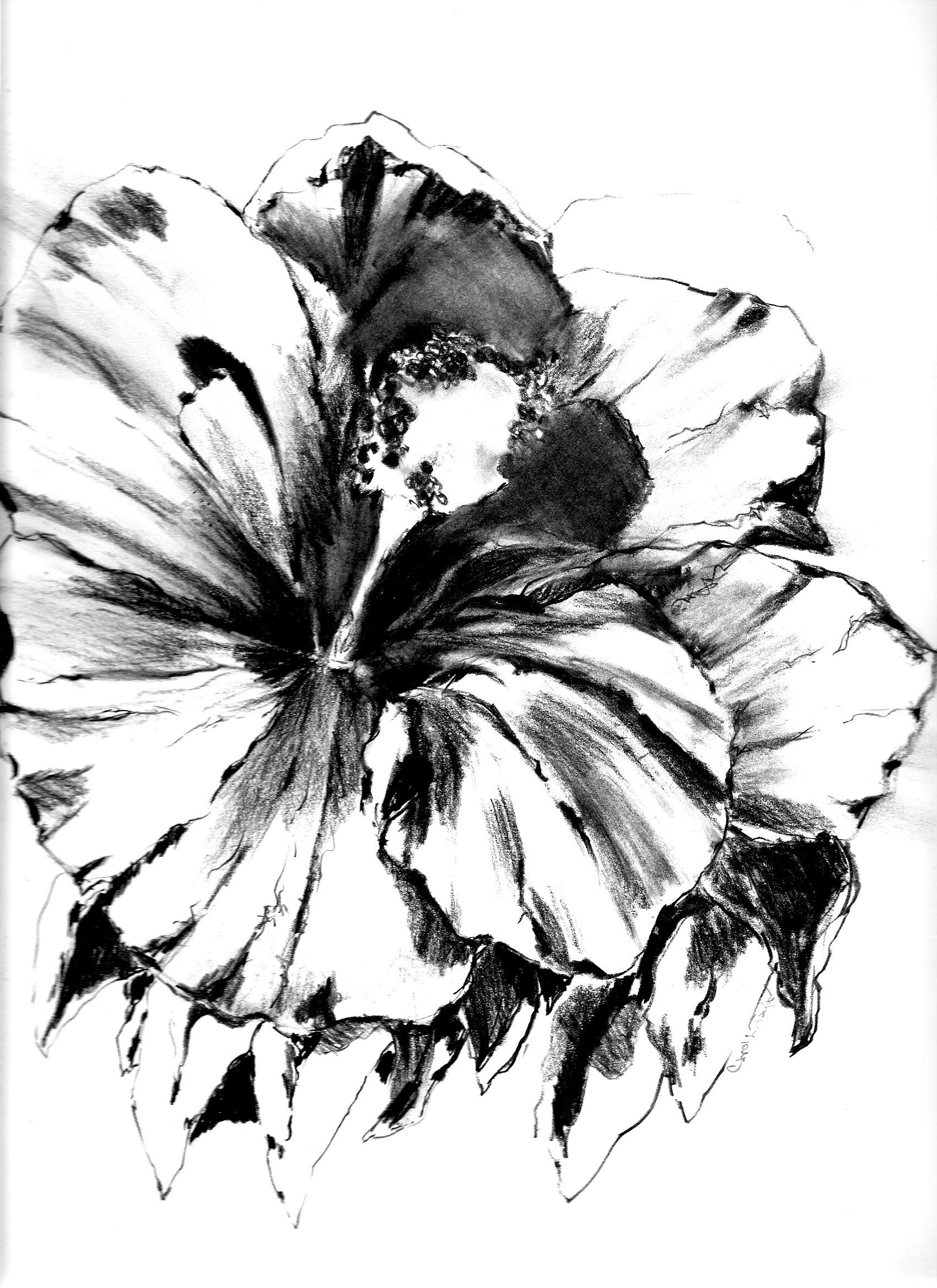 1700x2338 Drawn Hibiscus Different Flower