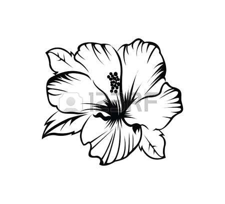 450x407 Drawn Hibiscus Hibiscus Plant