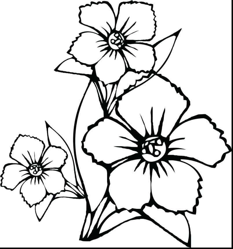 805x861 Hibiscus Flower Coloring Pages Coloring Pages For Spring Flowers