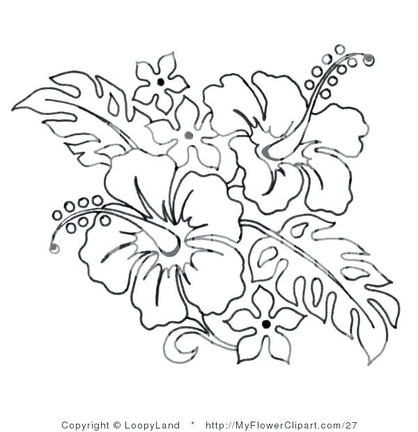 600x620 Hibiscus Flower Coloring Pages Flower Coloring Pages Hibiscus