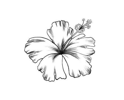 500x406 Hibiscus Flower Tattoo Black And White Elaxsir