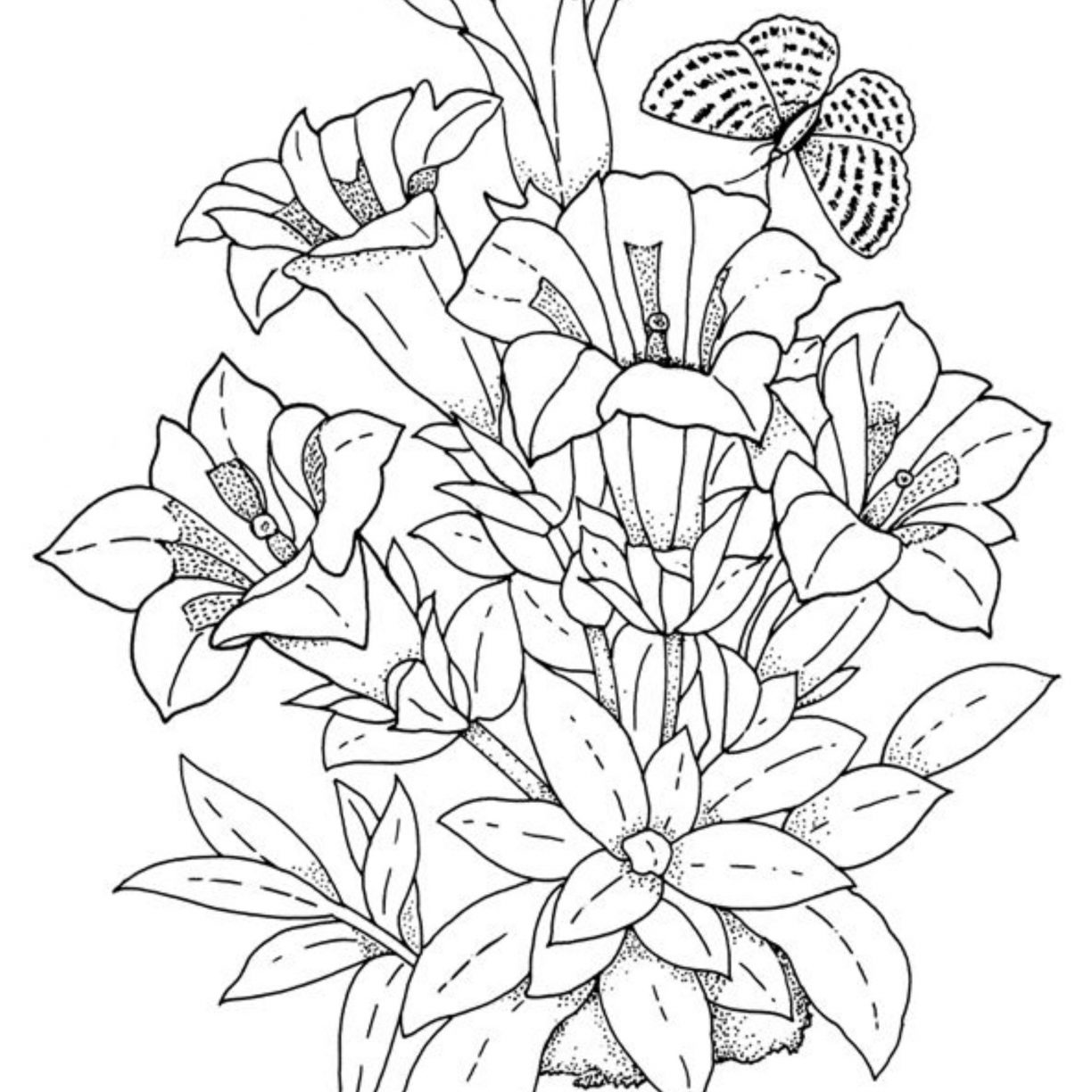 Hibiscus Plant Drawing at GetDrawings Free for