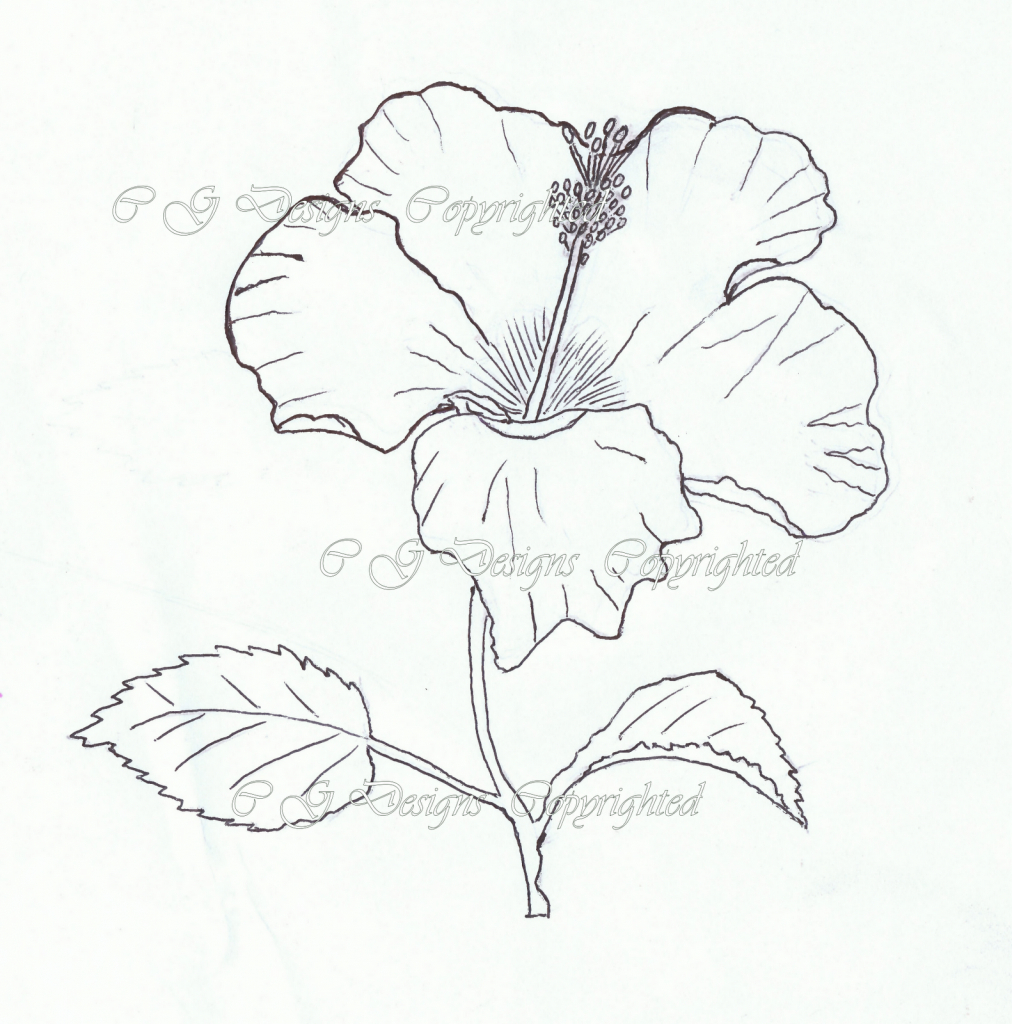 1012x1024 Drawn Hibiscus Sketch