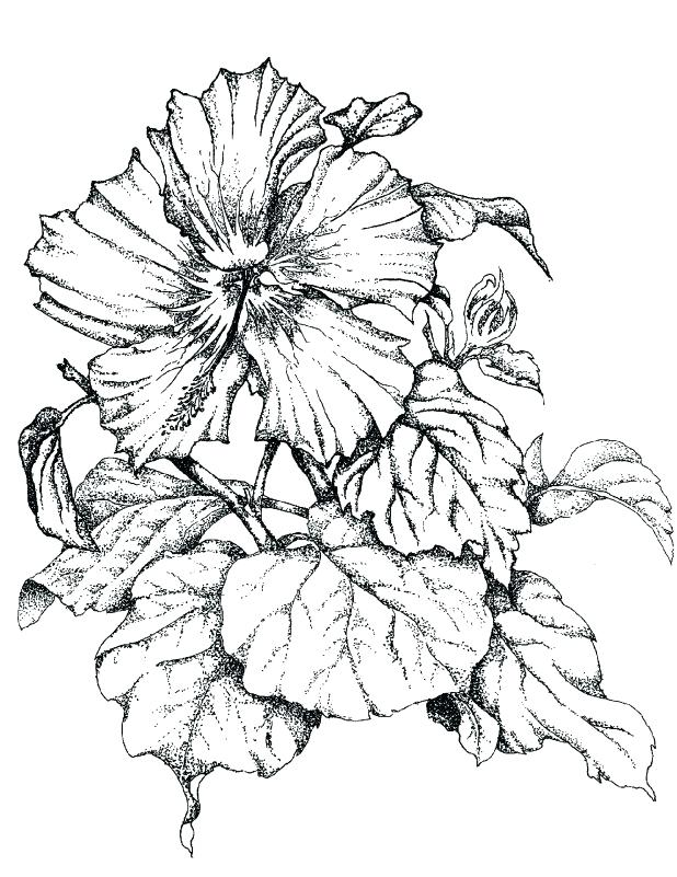 618x801 Floral Coloring Pages Packed With Free Flower Coloring Pages