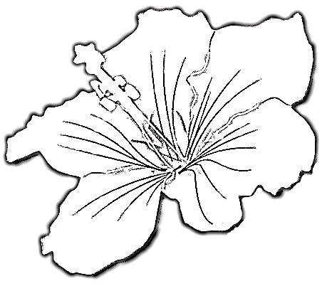 459x402 Free Hibiscus Flowers Tattoo Design