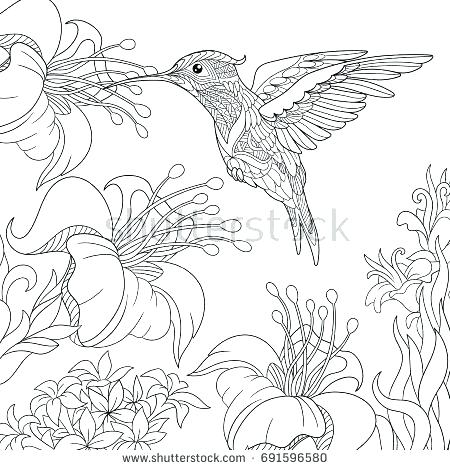 450x470 Hibiscus Flower Coloring Pages Flower Coloring Worksheet Working