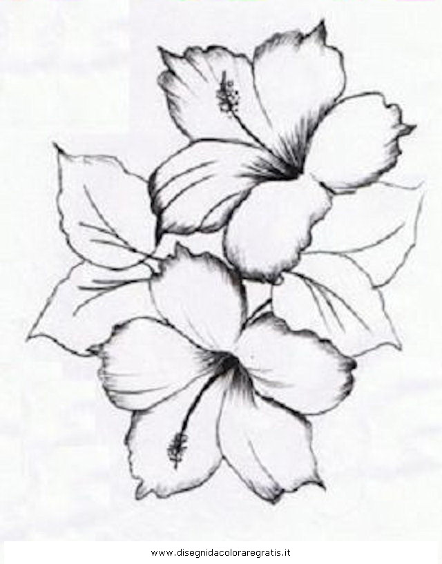Hibiscus tattoo drawing at free for for Hibiscus flower tattoo sketches