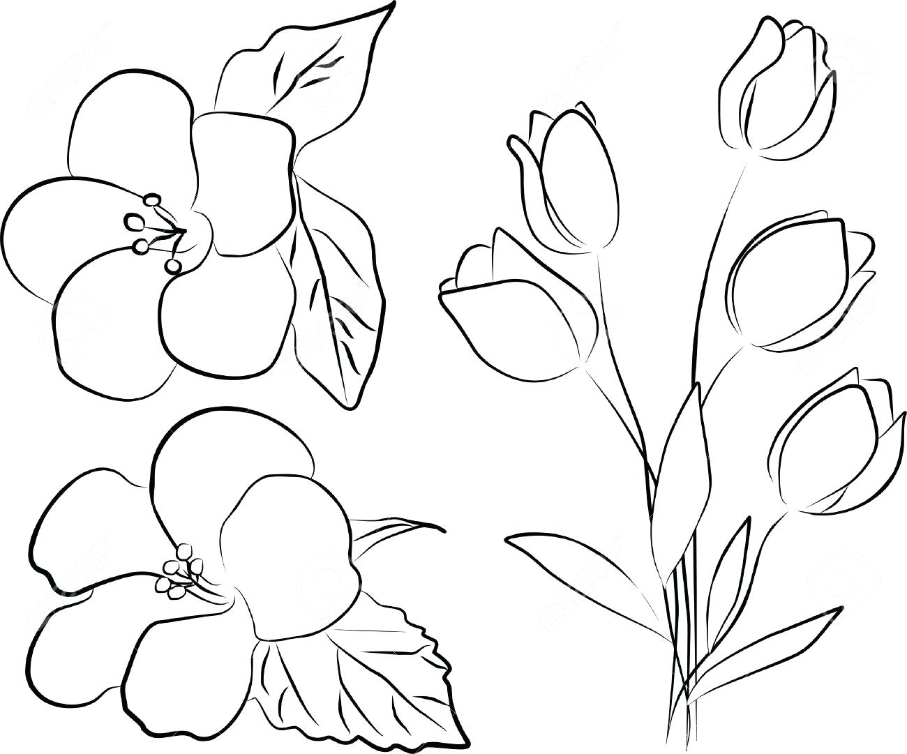 1300x1081 Simple Flower Outline Images Hibiscus Tattoo Vector Flower Outline