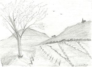 300x219 Trees Hill Drawings