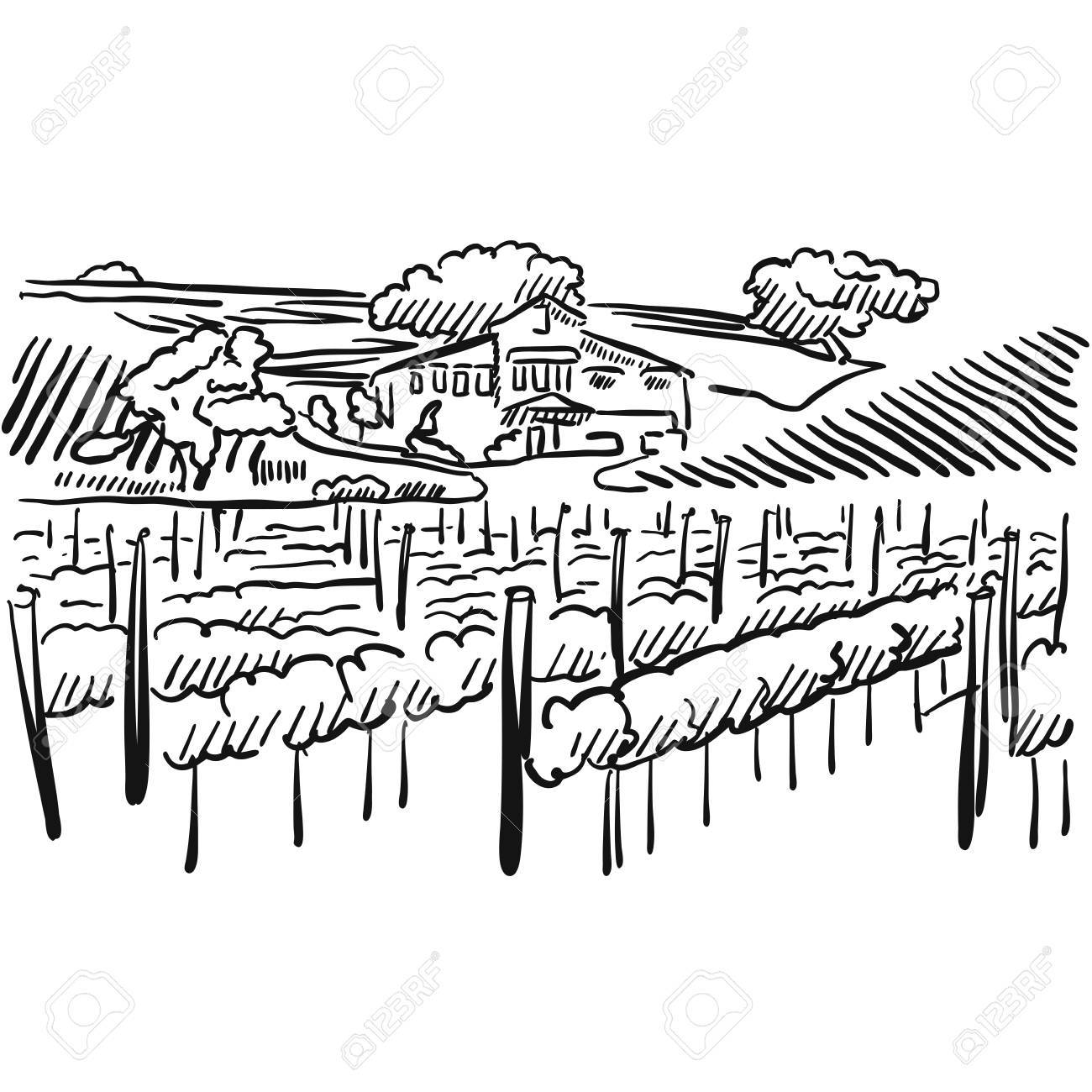 1300x1300 Californian Vineyard With Hills And House, Vector Sketched Artwork