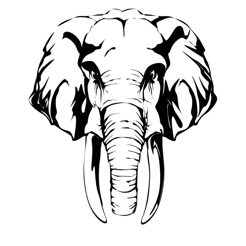 800x800 Indian Elephant Head Clipart