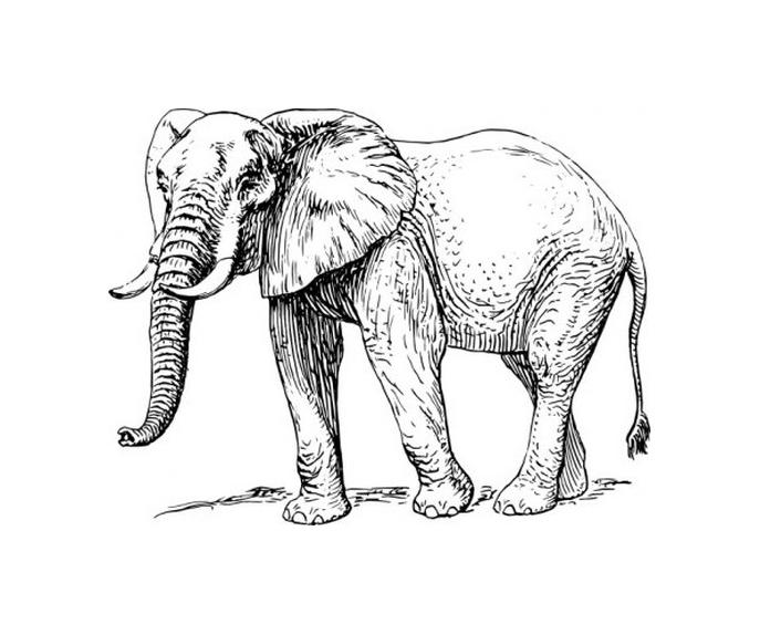 687x574 Soas Elephant Conference 2016