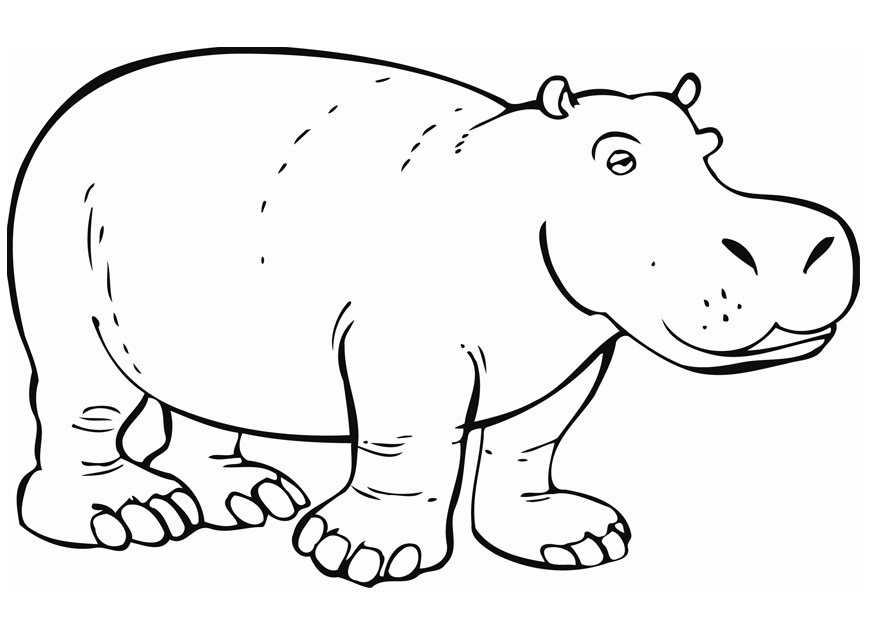 875x620 Awesome Hippo Coloring Pages 50 About Remodel Kids