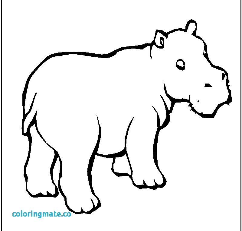 800x766 Hippo Coloring Pages Elegant Hippopotamus Coloring Page