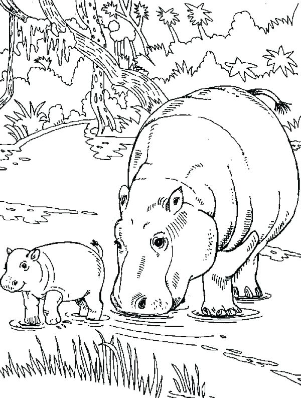 The best free Hippopotamus drawing images. Download from ...